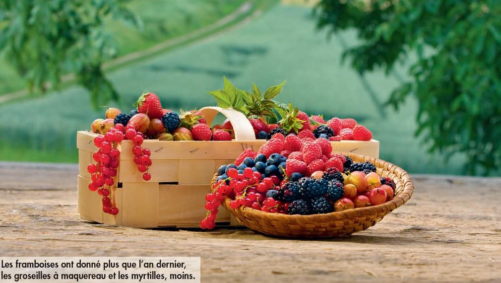 Bonne récolte 2013 pour les fruits