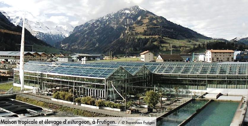 Maison tropicale et élevage d'esturgeon, à Frutigen. / © Tropenhaus Frutigen