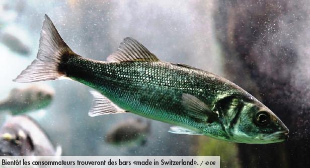 Bientôt des poissons de mer élevés en Suisse?