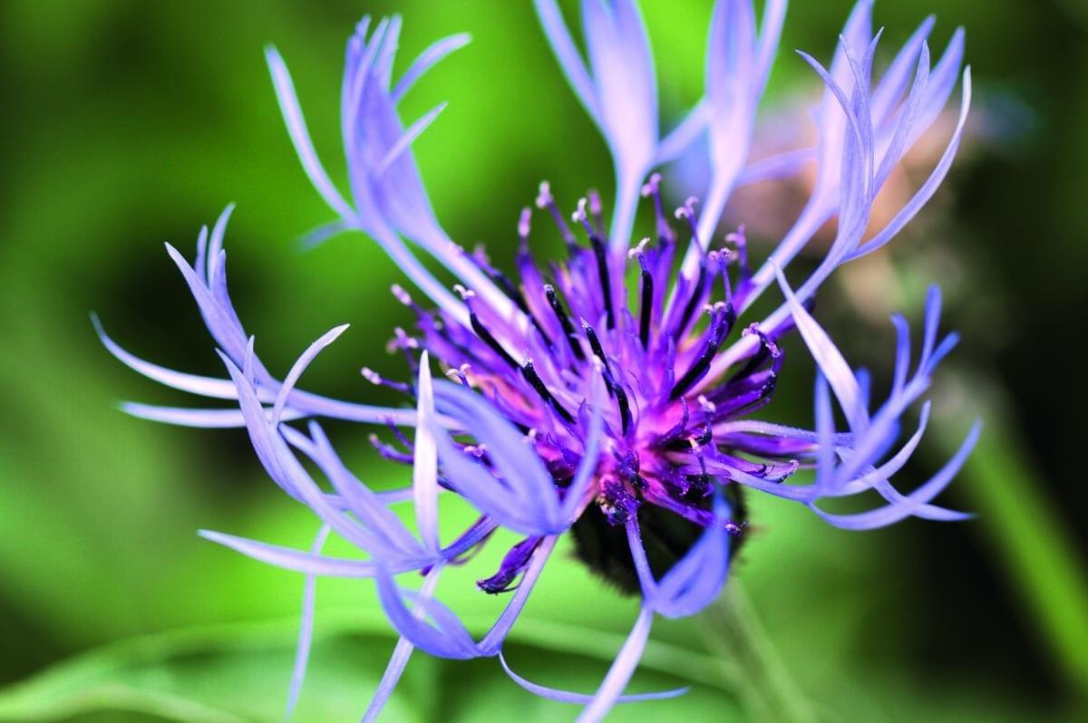Thés et tisanes fleuries, originalité assurée