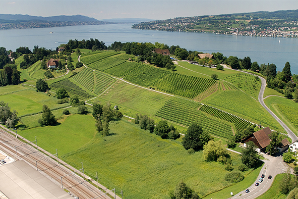 600 hectares de vignes pour le canton de Zurich
