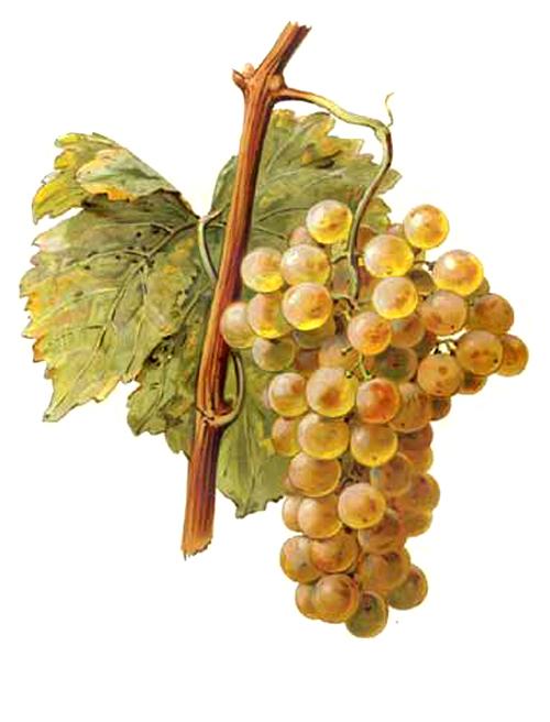 Résultats de la sélection cantonale des vins de Neuchâtel