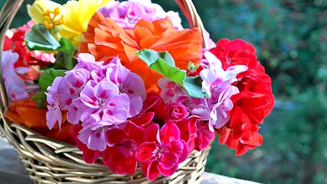 Société Romande des amis des roses et de l'horticulture
