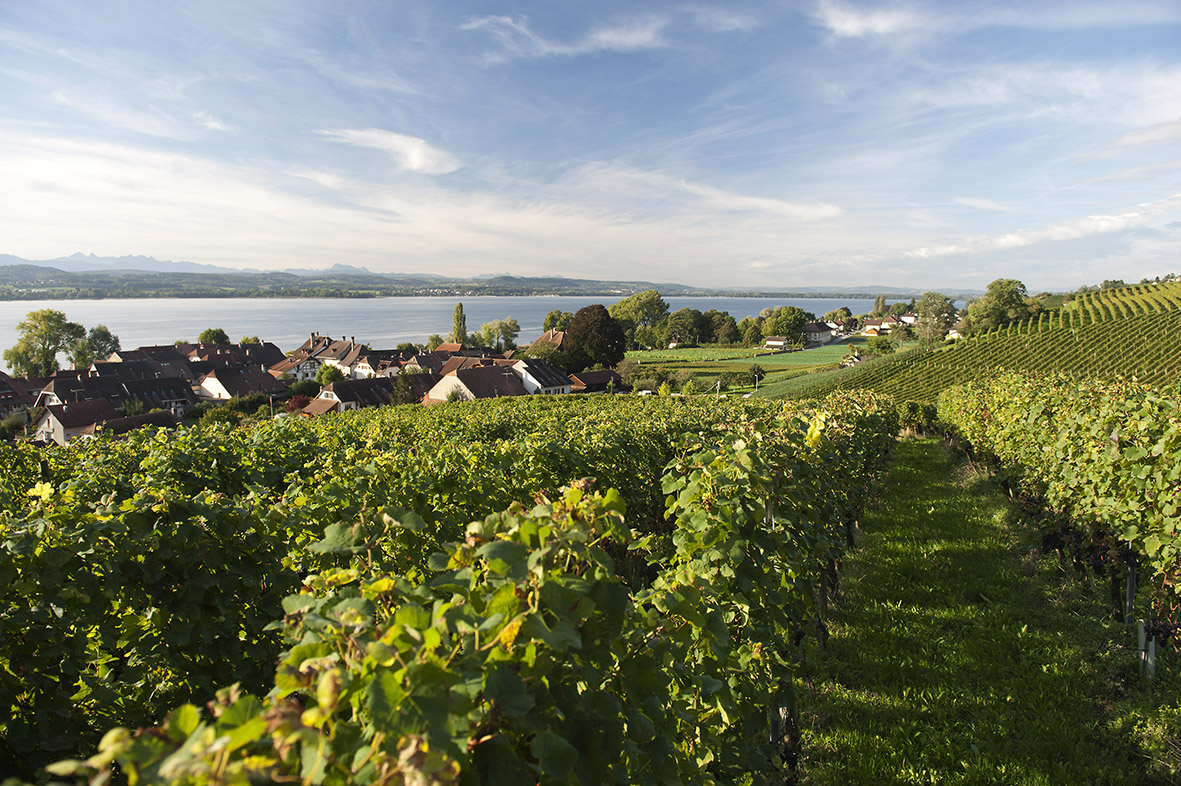 Fribourg – Vignobles du Vully:  diversité et  nouvelle direction
